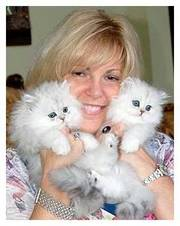 Adopt XXMMAASS Persian Kittens Now, ''URGENT''-3 Months Old