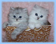Smiling kittens ready for a lovely home